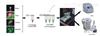 变形丝囊霉菌PCR检测试剂盒供应商