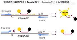 阿马帕里病毒PCR检测试剂盒