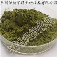 天然辣木叶提取物 /粉  浸膏粉
