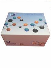 γ氨基丁酸C型受体进口试剂盒