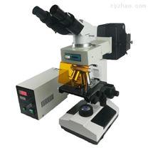 雙目正置熒光顯微鏡,生物視頻光學解剖鏡